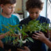 A group of young students hold plants in a classroom.