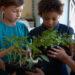 Un groupe de jeunes étudiants tiennent des plantes dans une salle de classe.