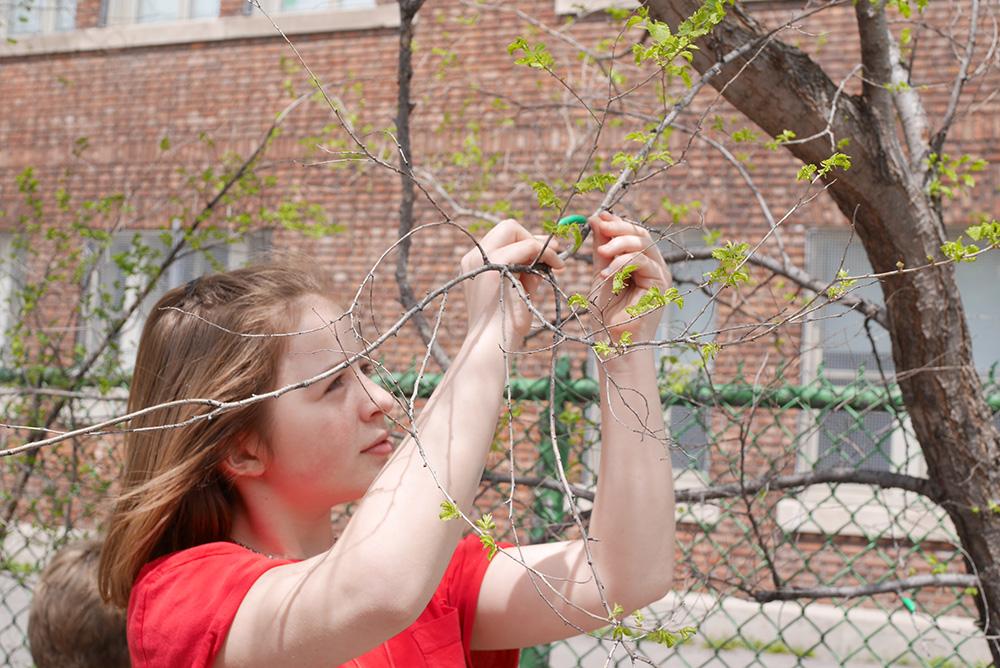 Une élève étudie les branches d'un arbre.