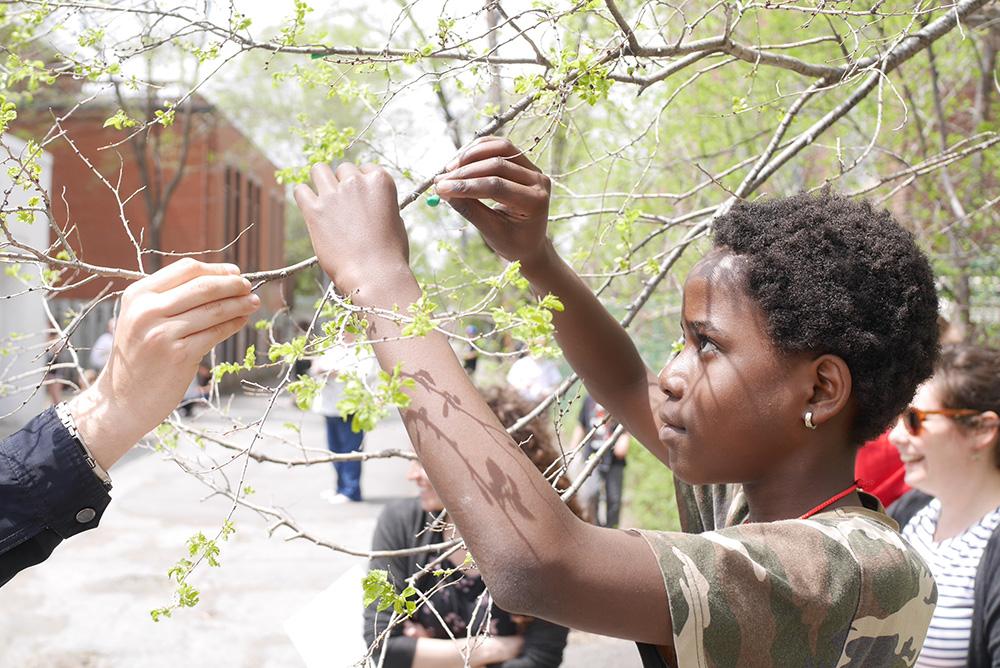 Un élève étudie les branches d'un arbre.