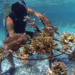 coral reef restoration project canada