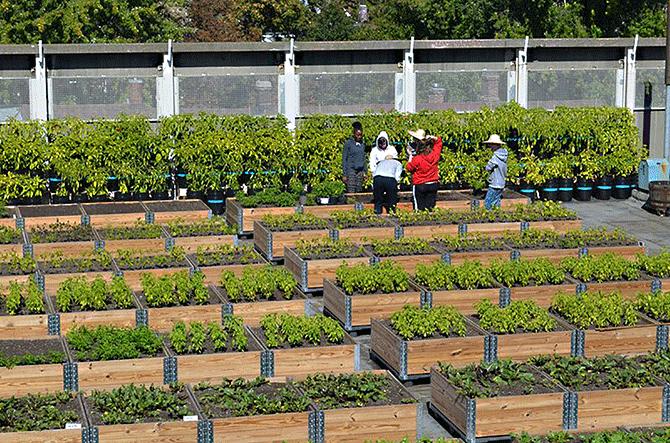 Eastdale Collegitate's 16,000 square foot rooftop garden, Toronto